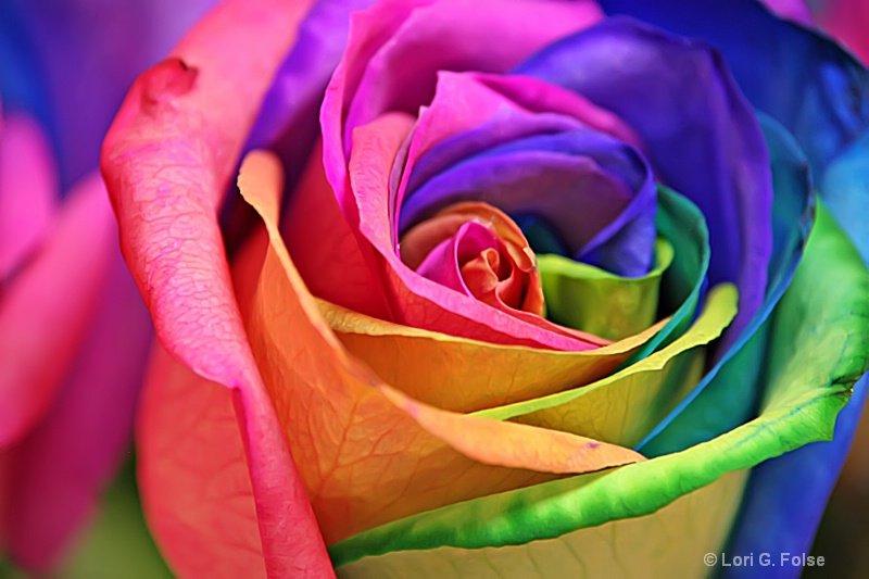 1102250542101rainbow_rose.jpg