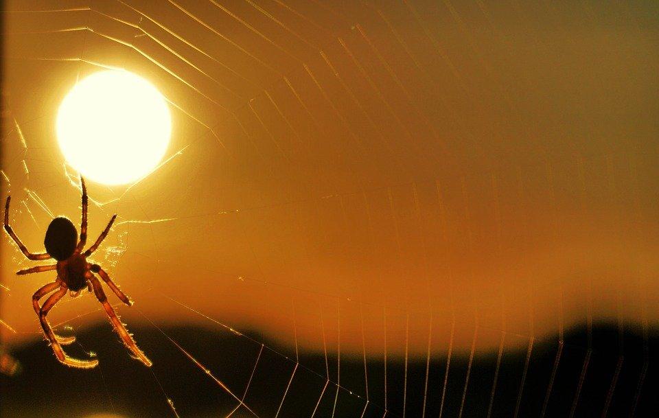 spider-2788463_960_720.jpg
