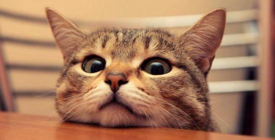 Il-gatto-demonizzato-ancora-secondo-alcuni-è-causa-di-malattie-mentali.jpg