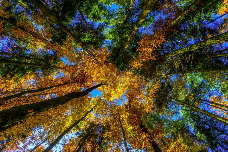 alberi-autunnali-dorati-nella-foresta-natura-62927155.jpg