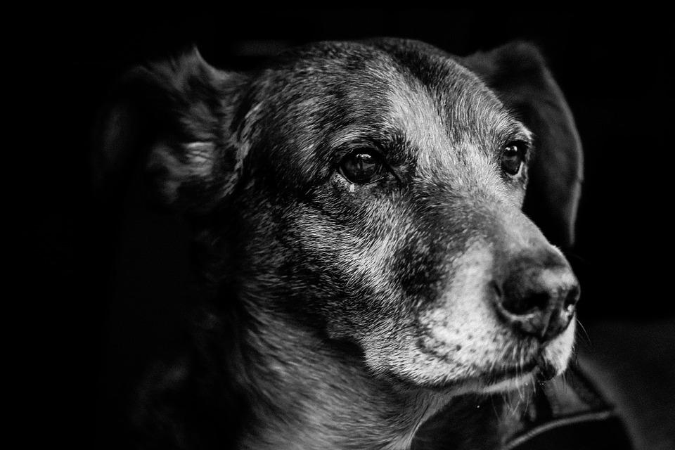 dog-903213_960_720.jpg