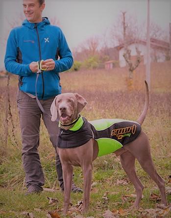 carattere-weimaraner-cane-caccia-blu-grigio-argentato.jpg