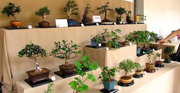 come-curare-un-bonsai.jpg