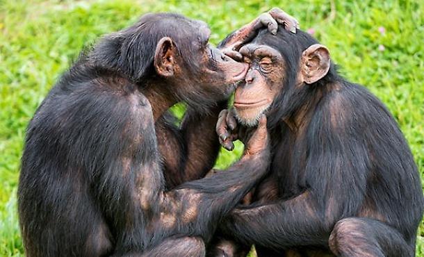1457189289953.jpg--la_clamorosa_scoperta_in_africa__le_scimmie_credono_in_dio.jpg