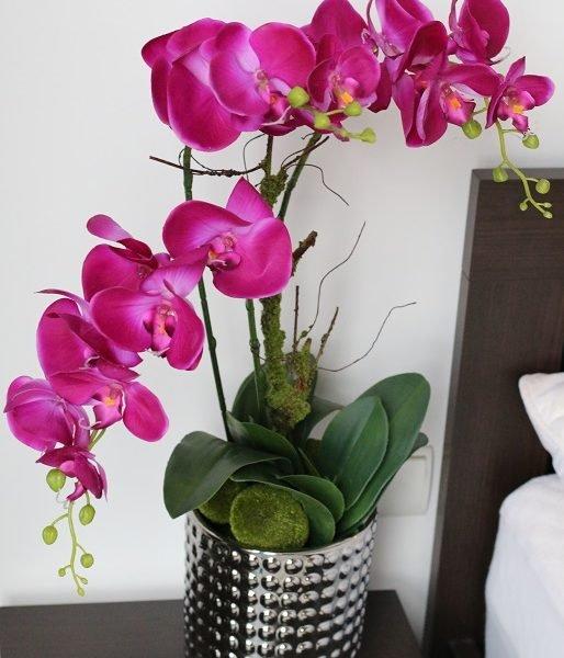 Orchidea-Pink