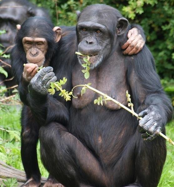 automedicazione-scimmie-1.jpg