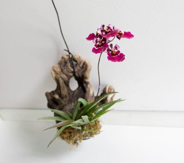 orchidea_aerea