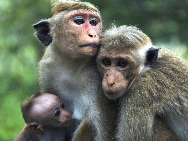 scimmia-2.jpg
