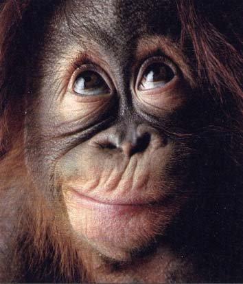 scimmia1.jpg
