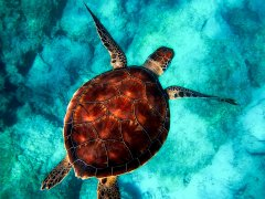 La perfezione esiste: è una tartaruga