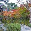 albero-di-acero-rosso-giapponese-durante-l-autunno