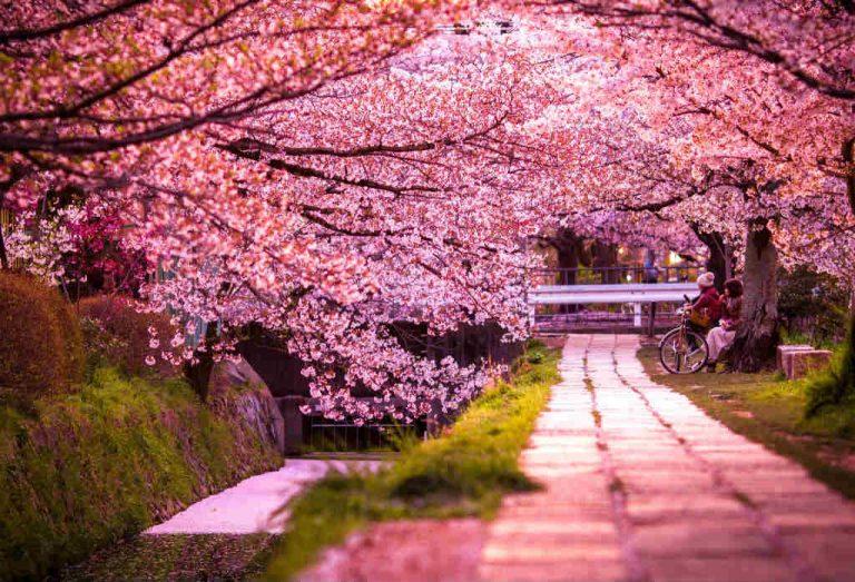 hanami-giappone-kyoto-Philosopher's-walk-768x523.jpg