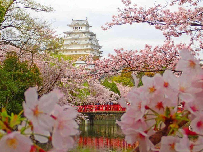 hanami-giappone-castello-Himeji-768x576.jpg