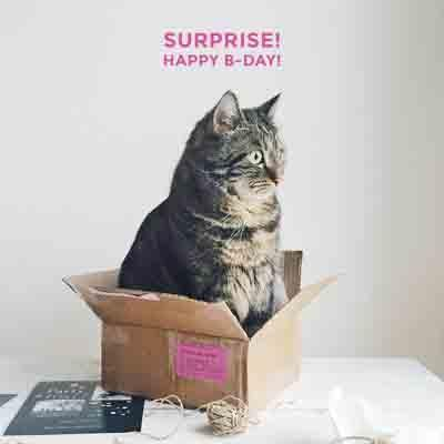 surprise-happy-birthday-cat-3306-0-1500970799000.jpg