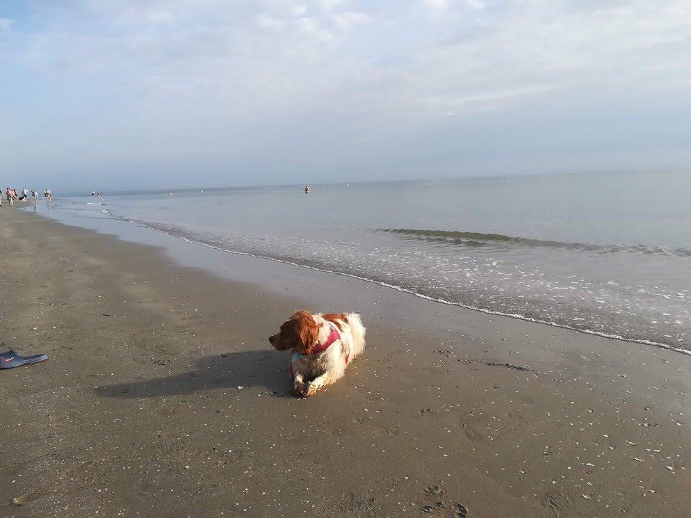 Rocco in spiaggia 1.jpg