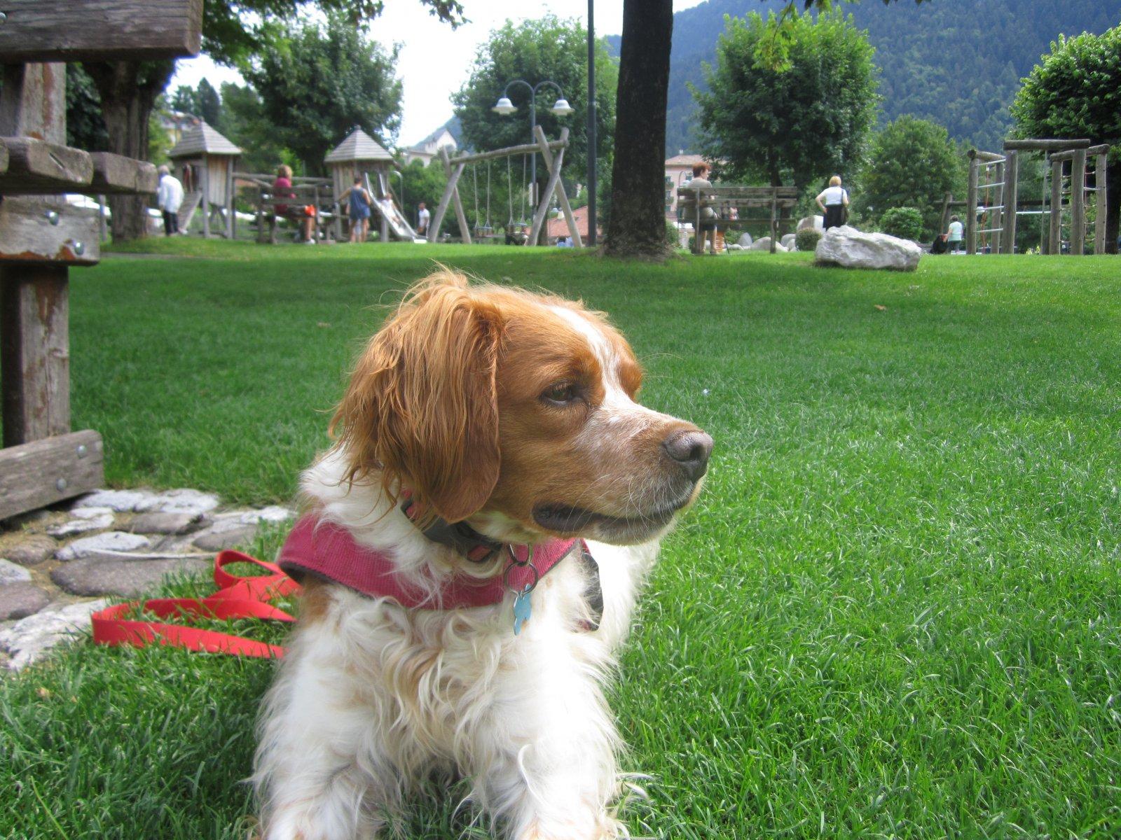 Rocco al parco.JPG