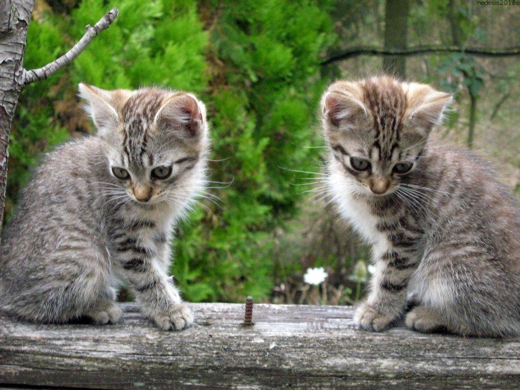 LIlla & Lillo.jpg