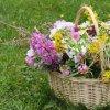 profumo-dei-fiori-2.jpg