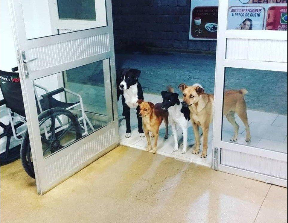 Lui è un senzatetto,  è in ospedale e i suoi cani lo aspettano alla porta :)