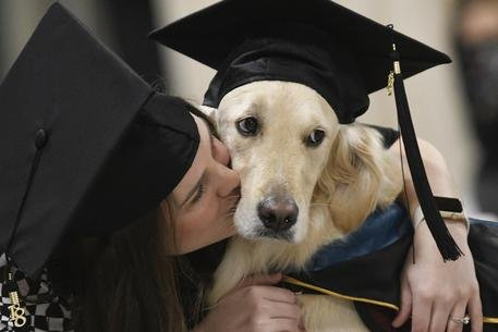 Laurea onoraria a un golden retriever che ha aiutato una studentessa disabile per il master!