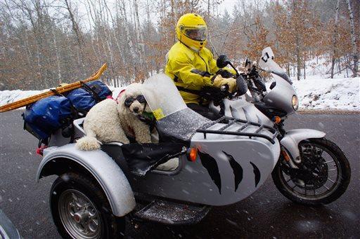 1417694548794_Pets_Sidecar_Dogs_rain__1_.jpg