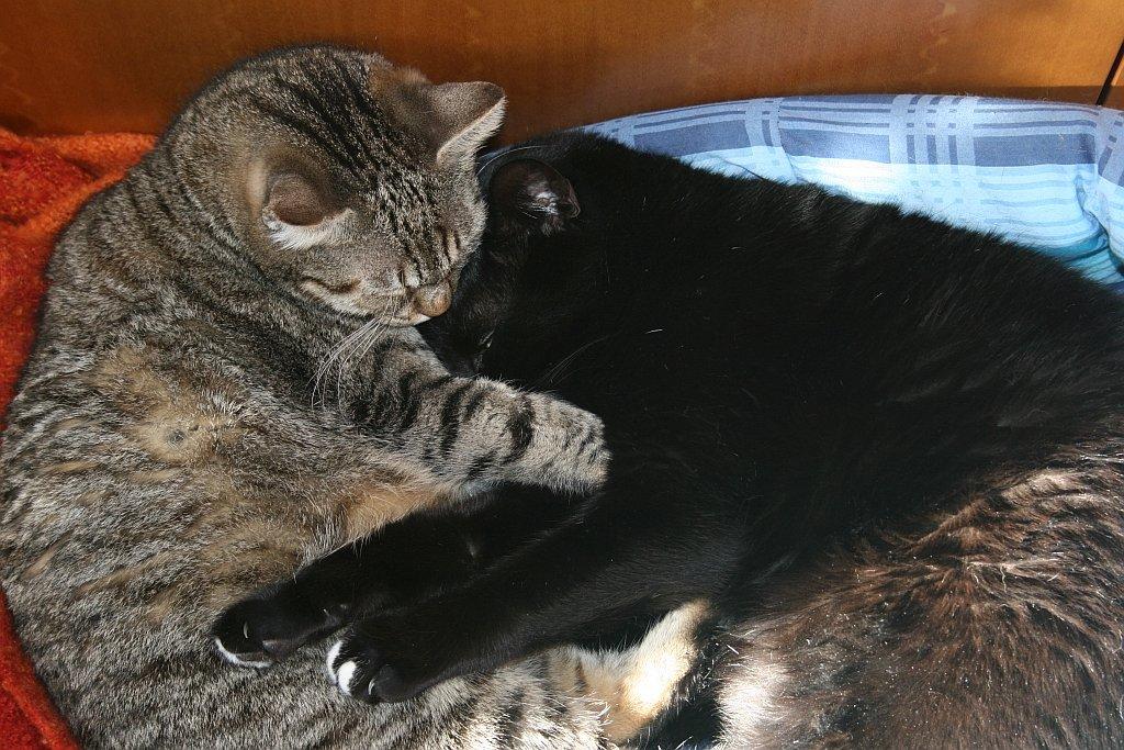 Abbraccio.jpg