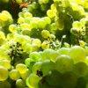 Degustazione vini DOC monferrini :