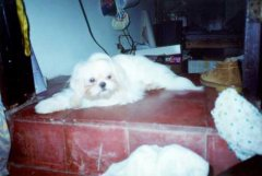 En Memoria de mis mascotas
