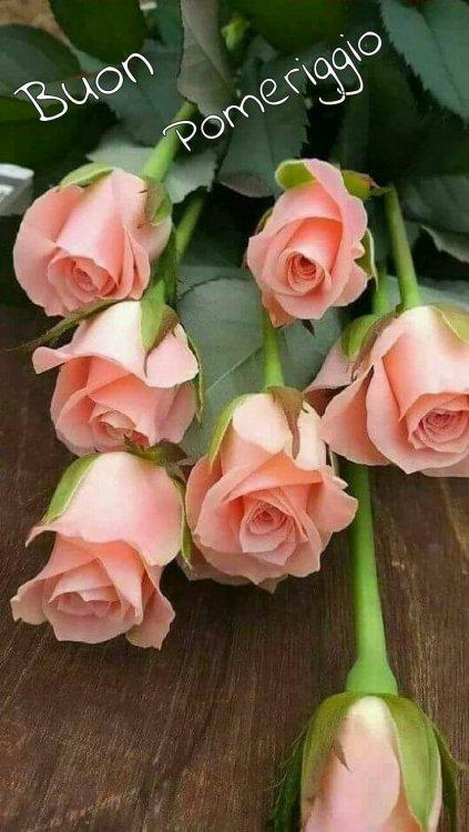 Immagini belle del Buon Pomeriggio con rose rosa.jpe