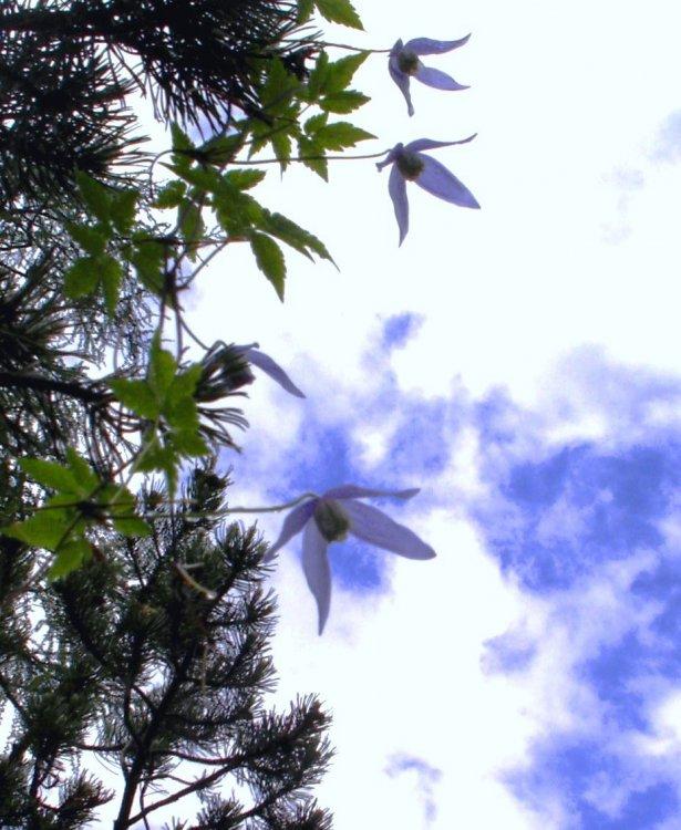 AA-flora20.jpg