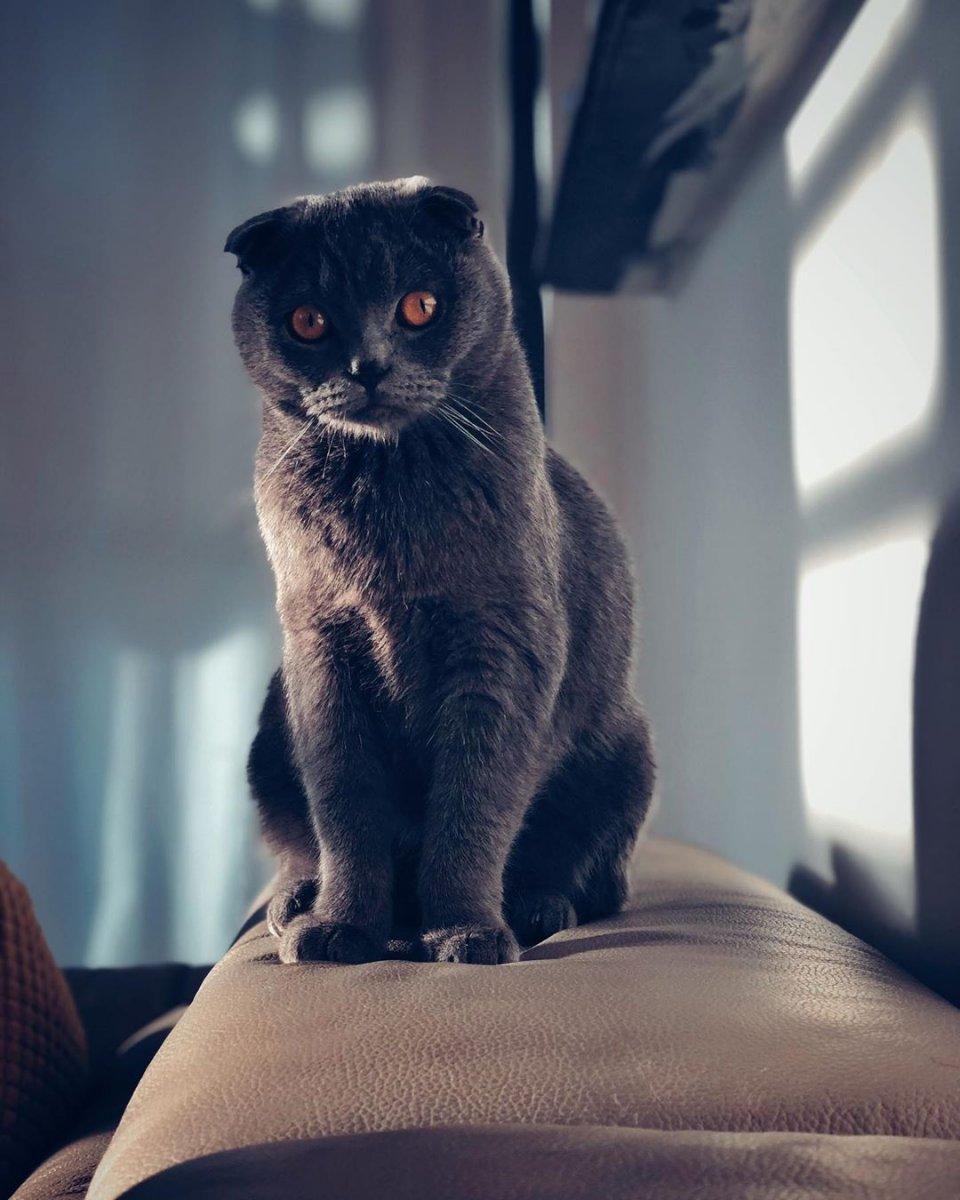 hobby gatto 1.jpg