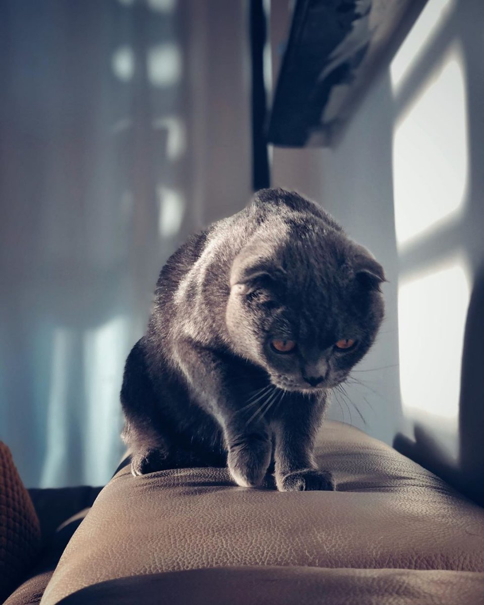 hobby gatto 2.jpg