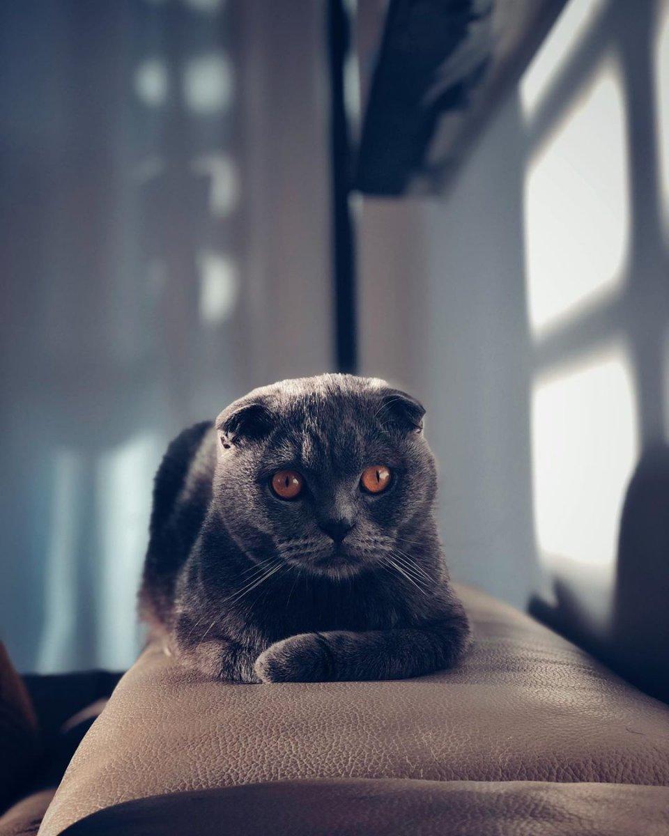 hobby gatto 4.jpg