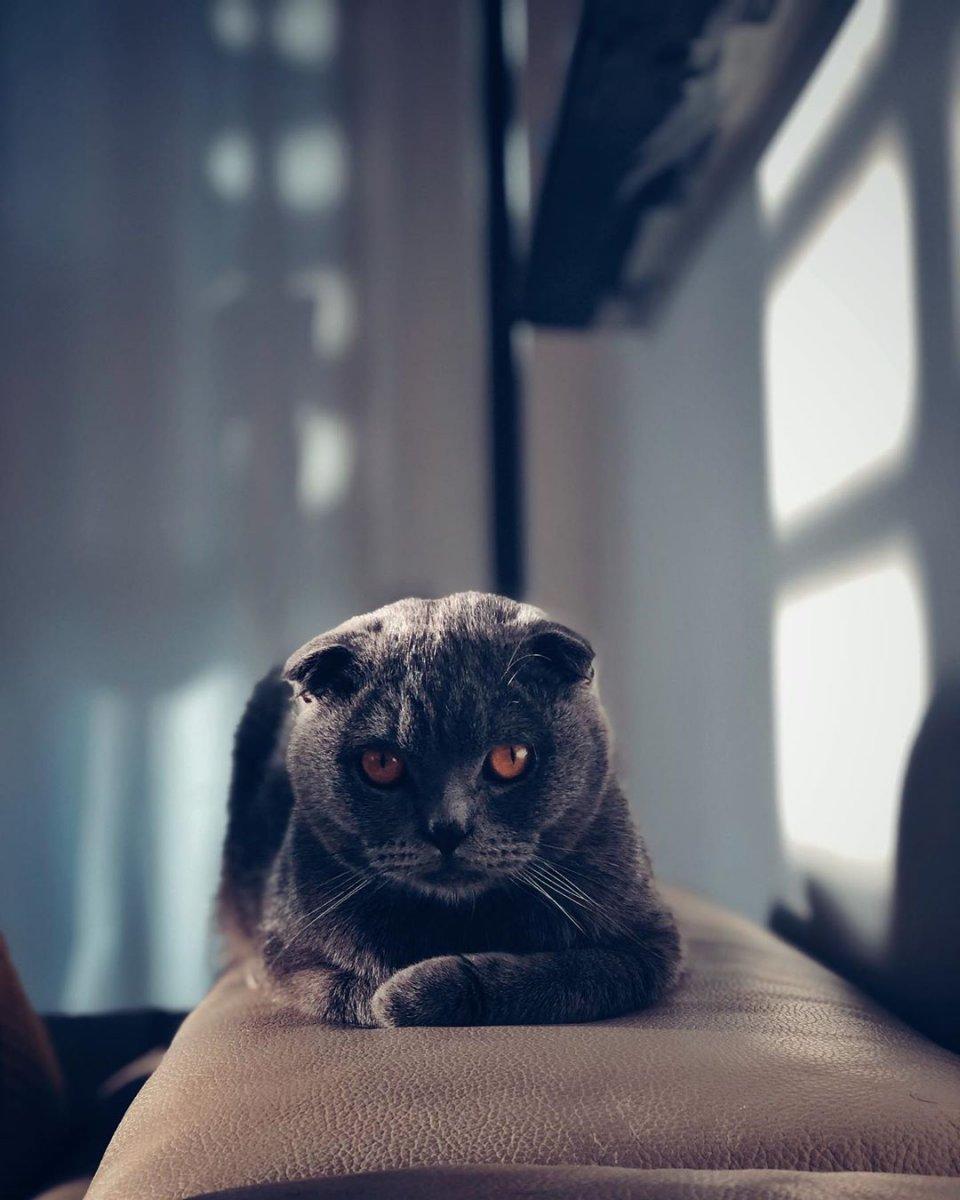 hobby gatto 5.jpg