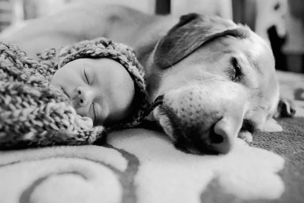piccoli-bambini-e-grandi-cani-8-608234.jpg