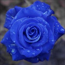 blu3.jpg