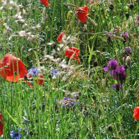 misto-di-fiori-selvatici-campestre-sativa-wb12-.jpg