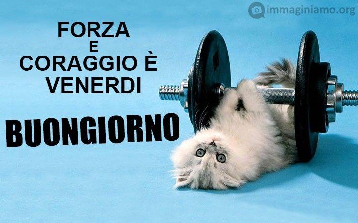 5a8fc65713e9a_Immagini-venerdi-divertenti.jpg