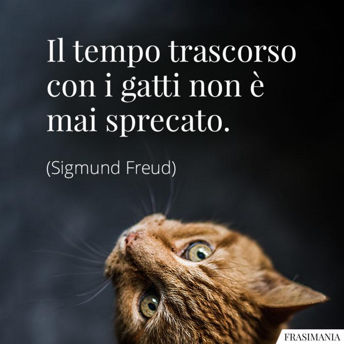 frasi-gatti-tempo-freud-700x700.jpg