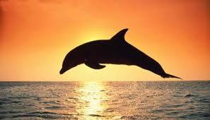 delfino tramonto.jpg