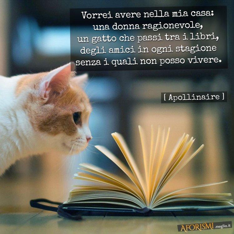 apollinaire-gatto-libri-amici.jpg