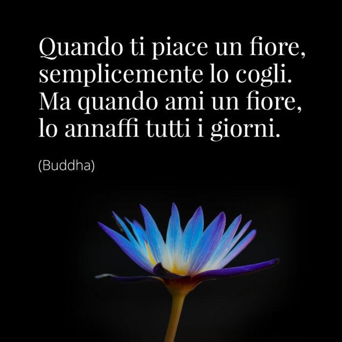 frasi-fiore-cogli-ami-buddha-700x700.jpg