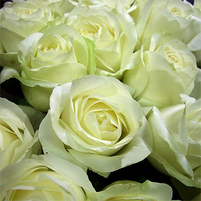 Tre-Rose-Bianche.jpg