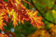 Quanto amo l'autunno!