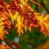 foliage 1.jpg