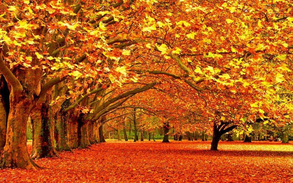 Autumn4.jpg