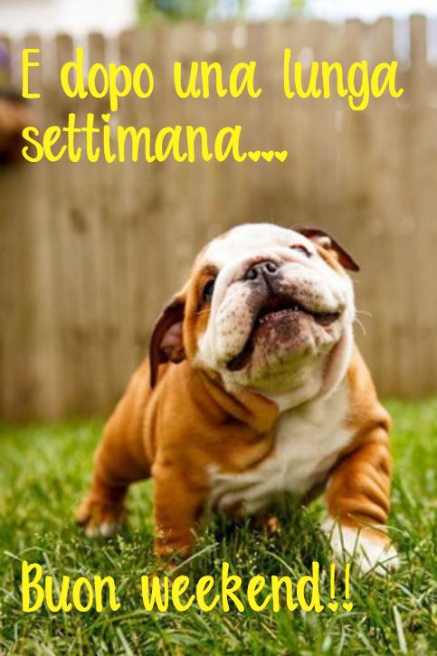 DIVERTENTEbuon_fine_settimana_weekend_domenica_animali_simpatici_carini_divertenti_1536911773.png