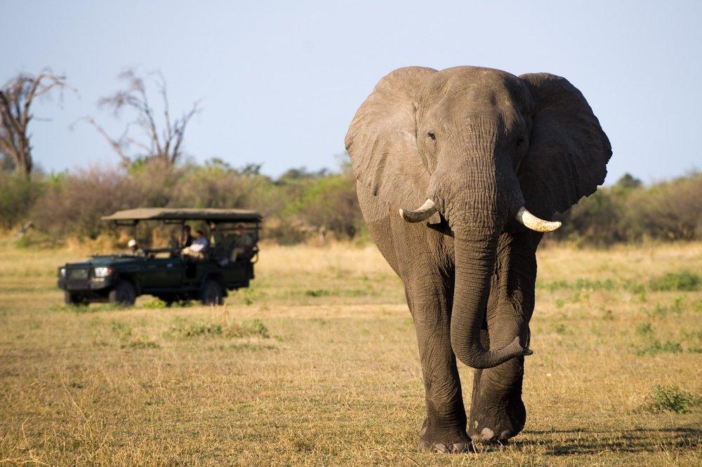 East-Africa-Tourism-1.thumb.jpg.e6b51e36a8ee549fbd30af0a4a6c2848.jpg