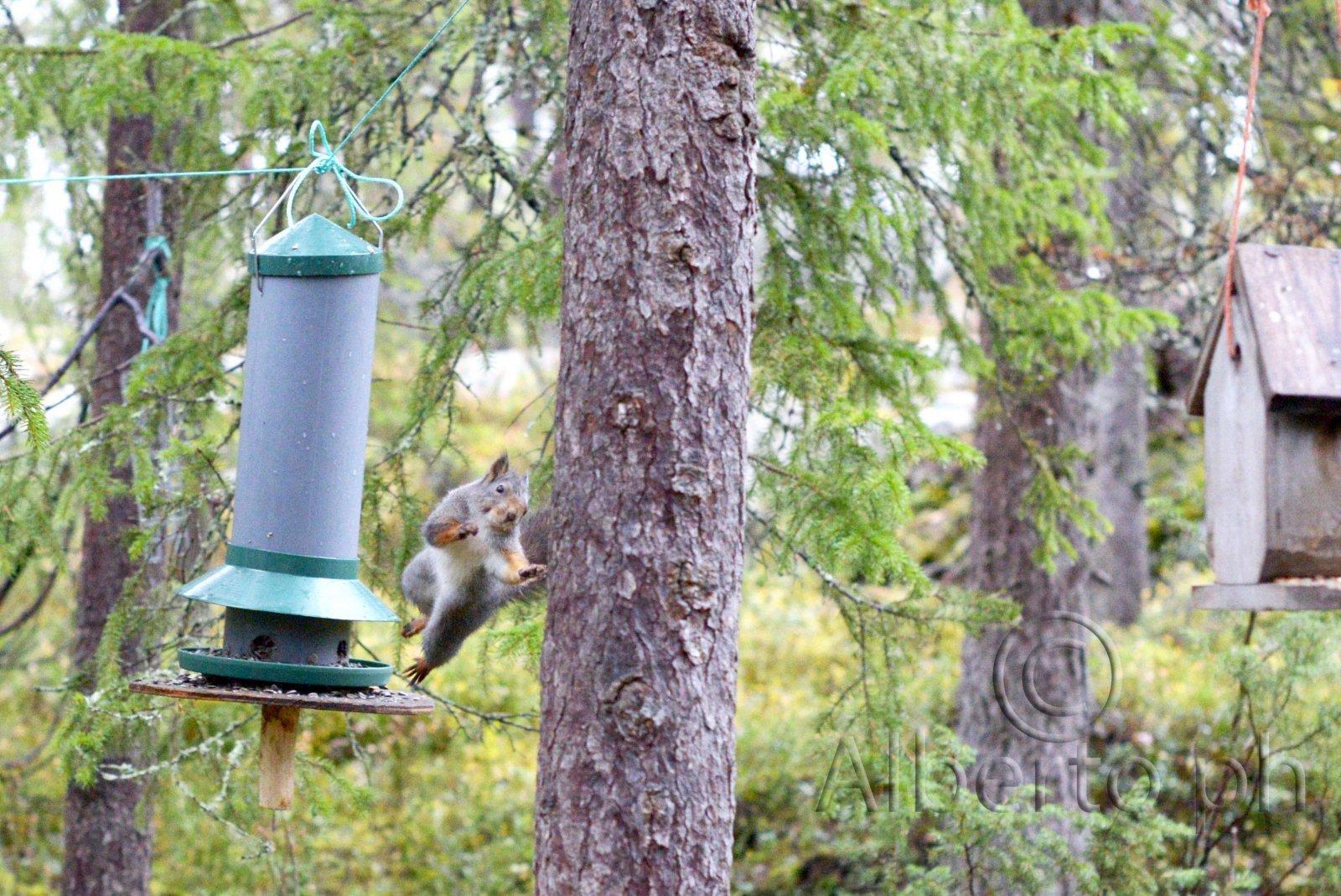 La fuga dello scoiattolo
