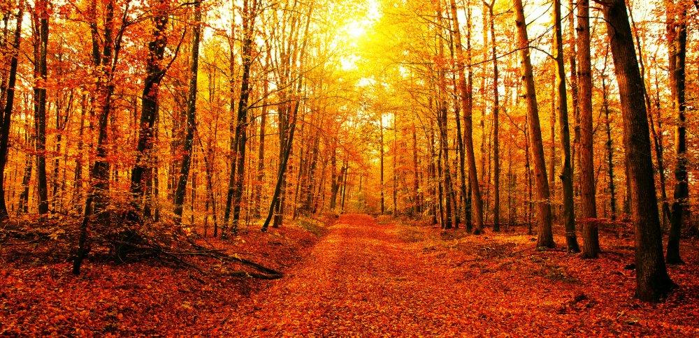 1-istock-autunno-foliage.jpg